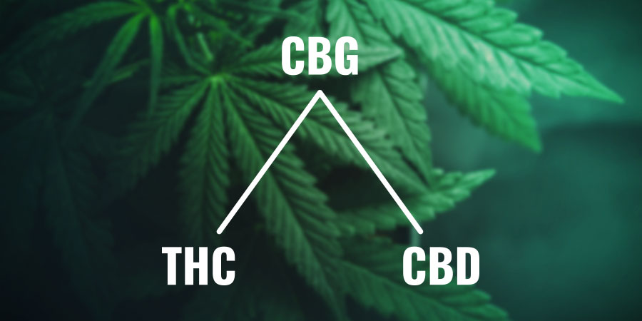 What is CBG (cannabigerol) & what does this cannabinoid do